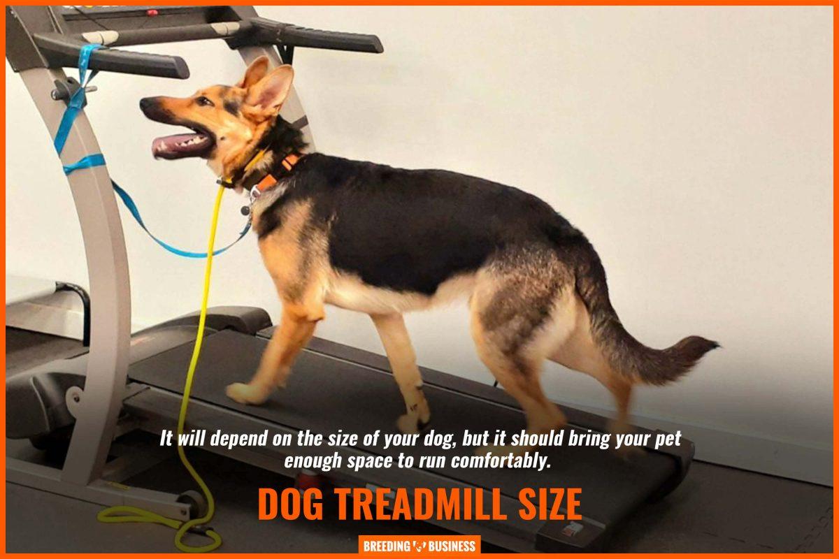 dog treadmill size