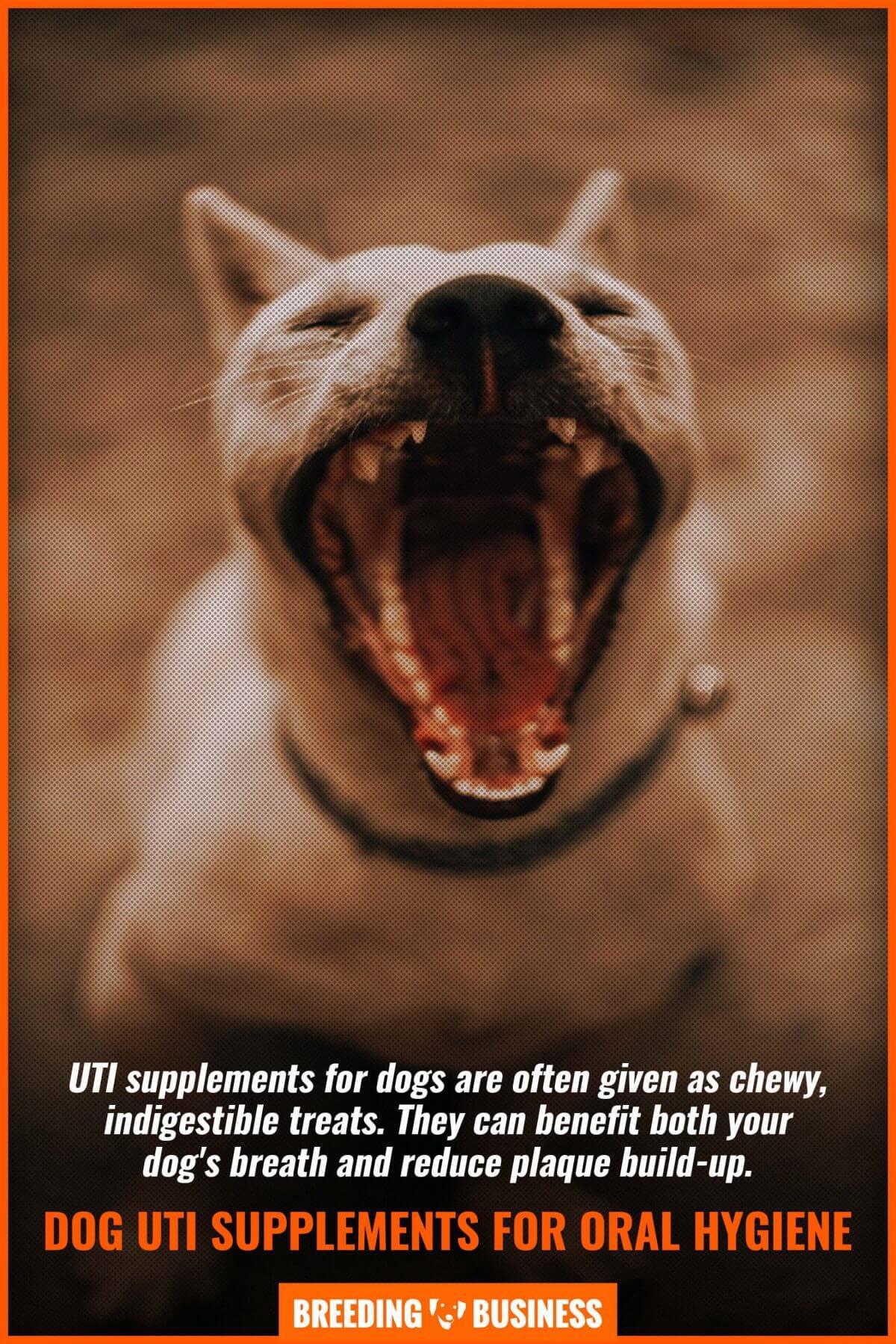 dog uti supplements for oral hygiene
