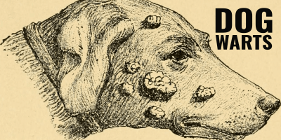 Dog Warts – Guide, Causes, Treatment, Prevention & FAQ