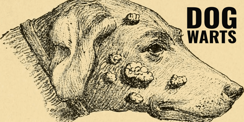 Dog Warts – Types, Symptoms, Treatments & FAQ