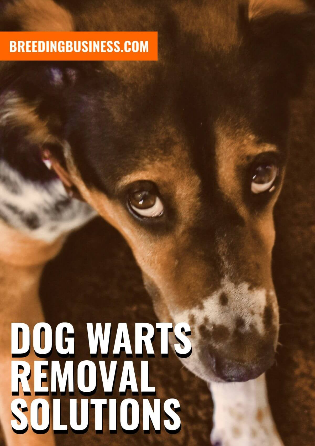 10 Best Dog Wart Removal Solutions