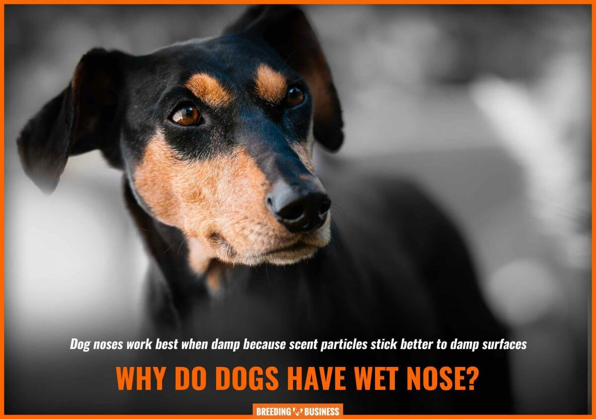 dog wet nose – scent particles