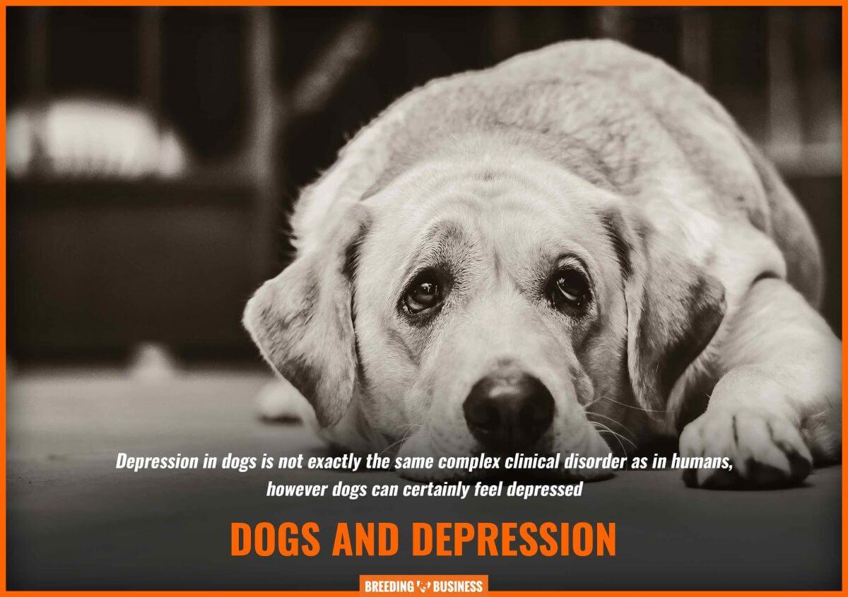 dogs feel depressed