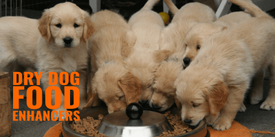 Best Dry Dog Food Enhancers – Reviews, Pros, Cons & FAQ