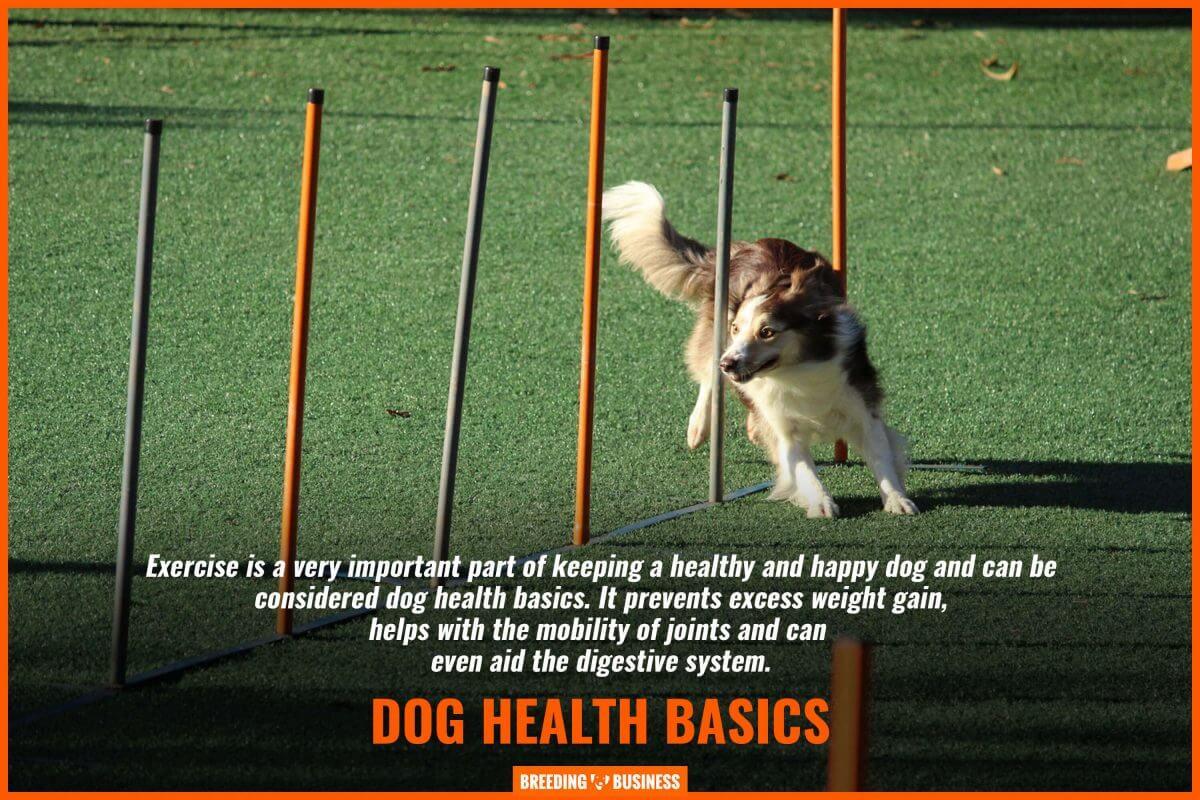 exercise is part of dog health basics