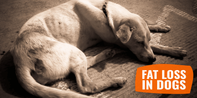 Fat Loss In Dogs – Weight Loss Guide for Dogs