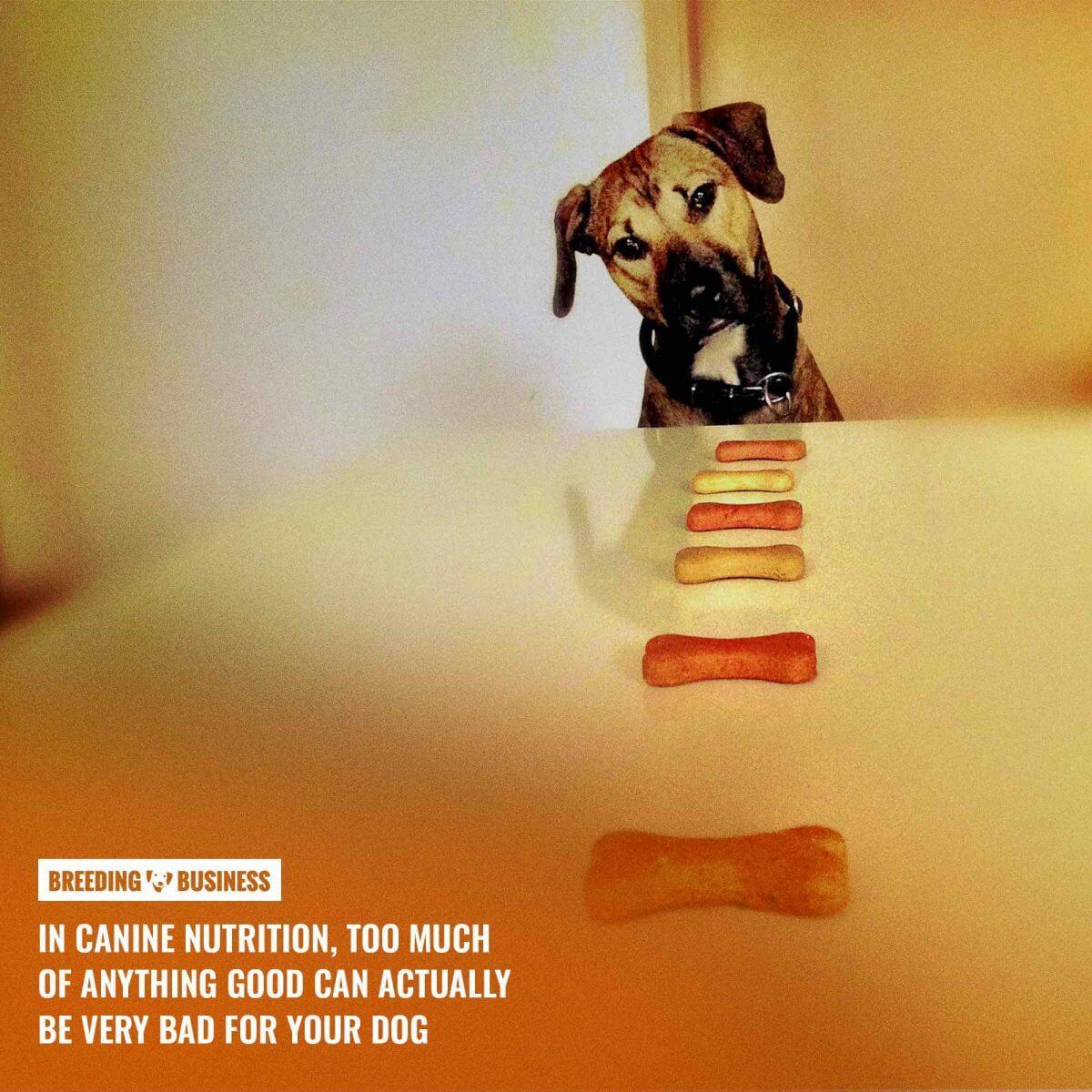 dog food enhancer calorie content