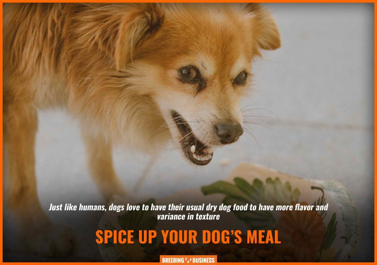 The best dog food enhancers add flavor and texture!