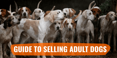 Guide to Selling Adult Dogs – hint: it's harder than selling puppies!
