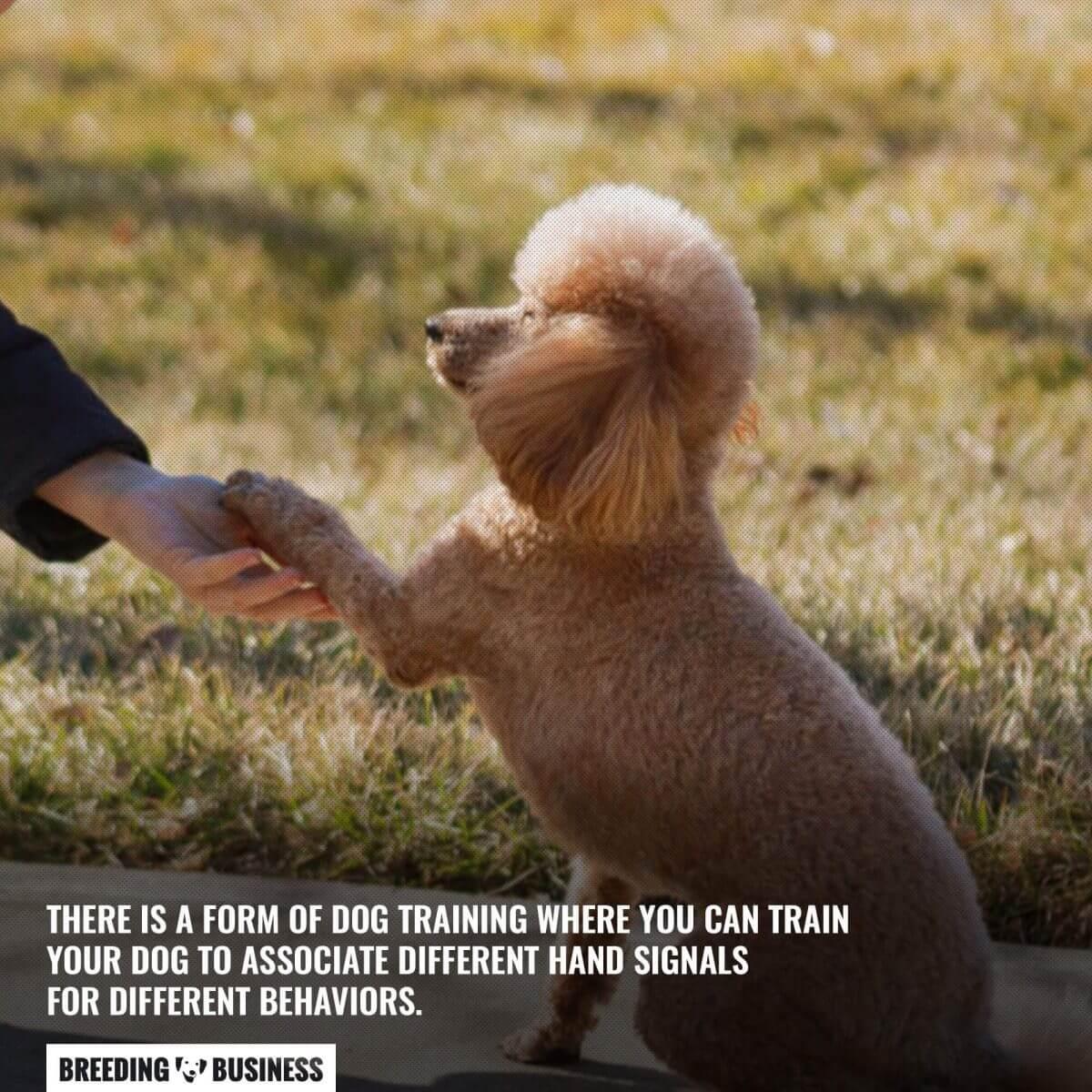 dog training using hand gestures