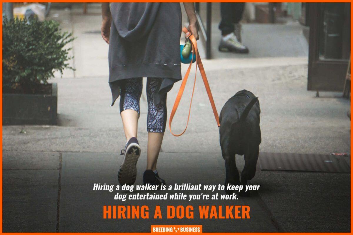 hiring a dog walker
