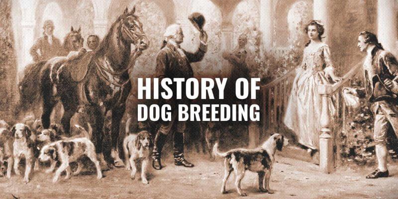 dog breeding history