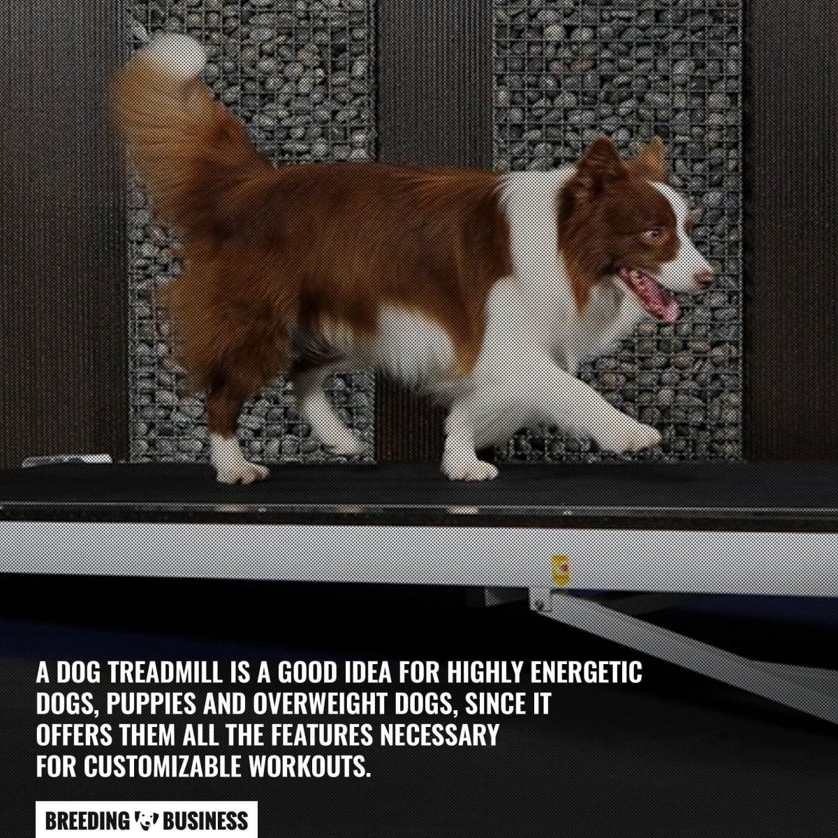 how long should a dog be on a treadmill