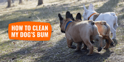How can I clean my dog's bum?