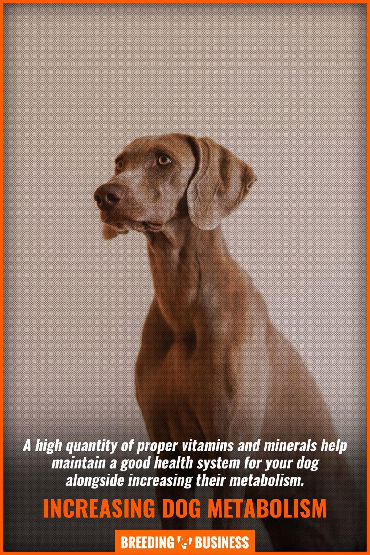 increasing dog metabolism