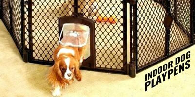 Best Indoor Dog Playpens
