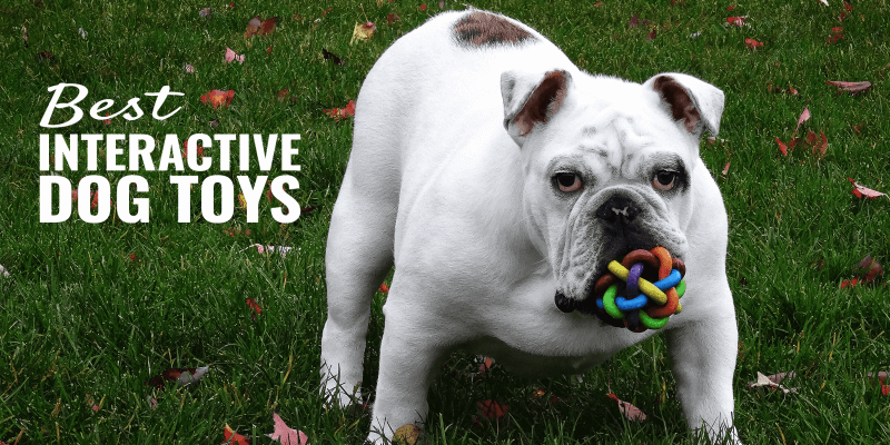 Best Interactive Dog Toys – Reviews & Smart Toys Buying Guide!