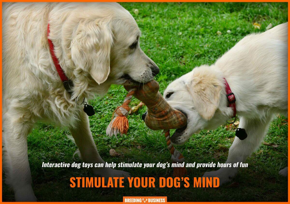 Interactive dog toys stimulate the dog's mind.