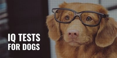 iq tests for dogs