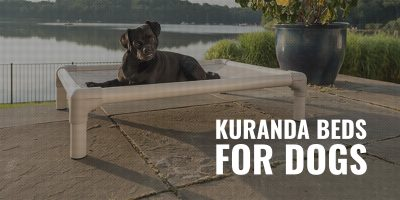 kuranda beds for dogs
