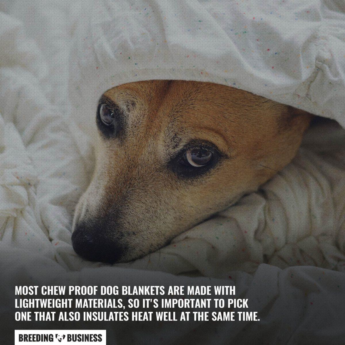 lightweight chew proof blanket