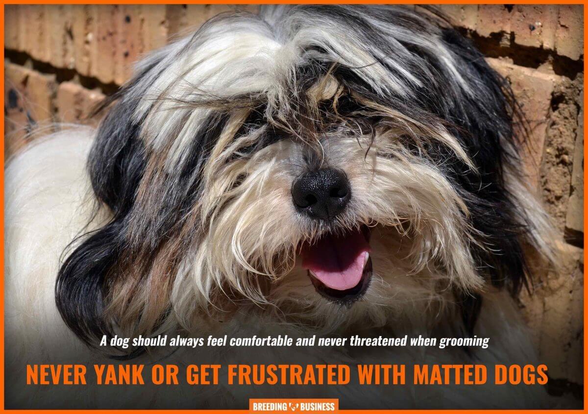 matted dog frustration
