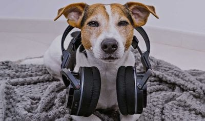 80+ Music Dog Names: Music-Inspired Pup Names (from Mozart to Pop!)