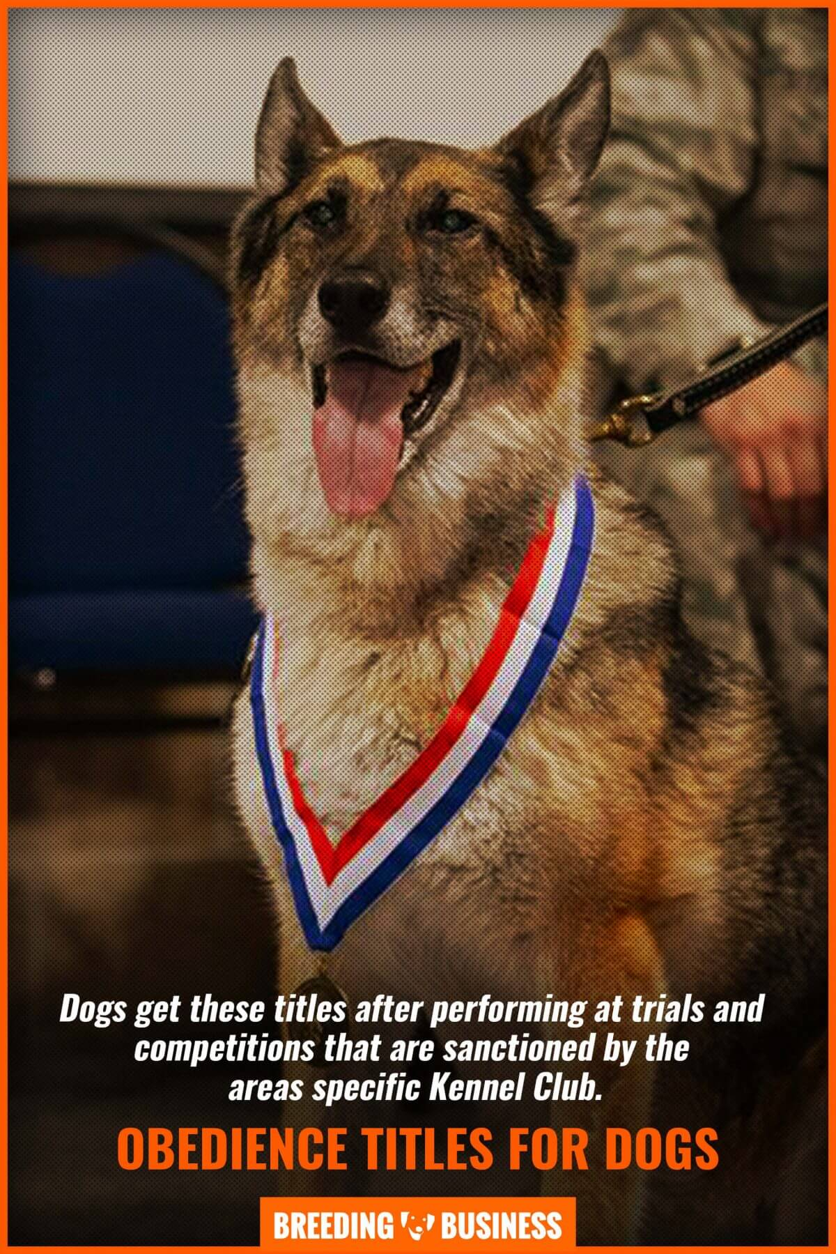 obedience titles for dogs