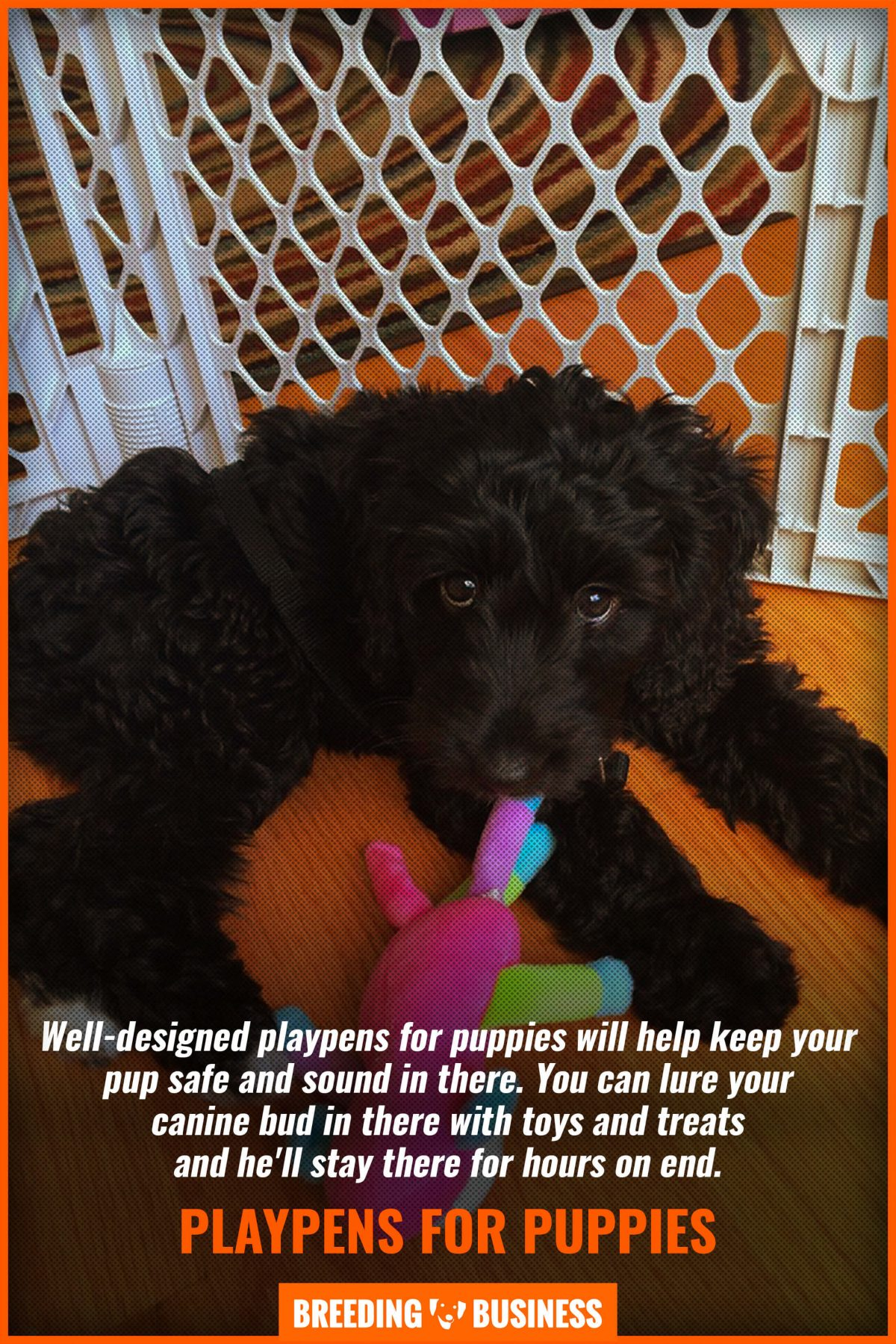 playpens for puppies