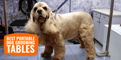 7 Best Portable Dog Grooming Tables