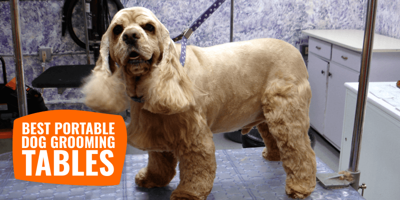 Best Portable Dog Grooming Tables – Reviews & Buying Guide!
