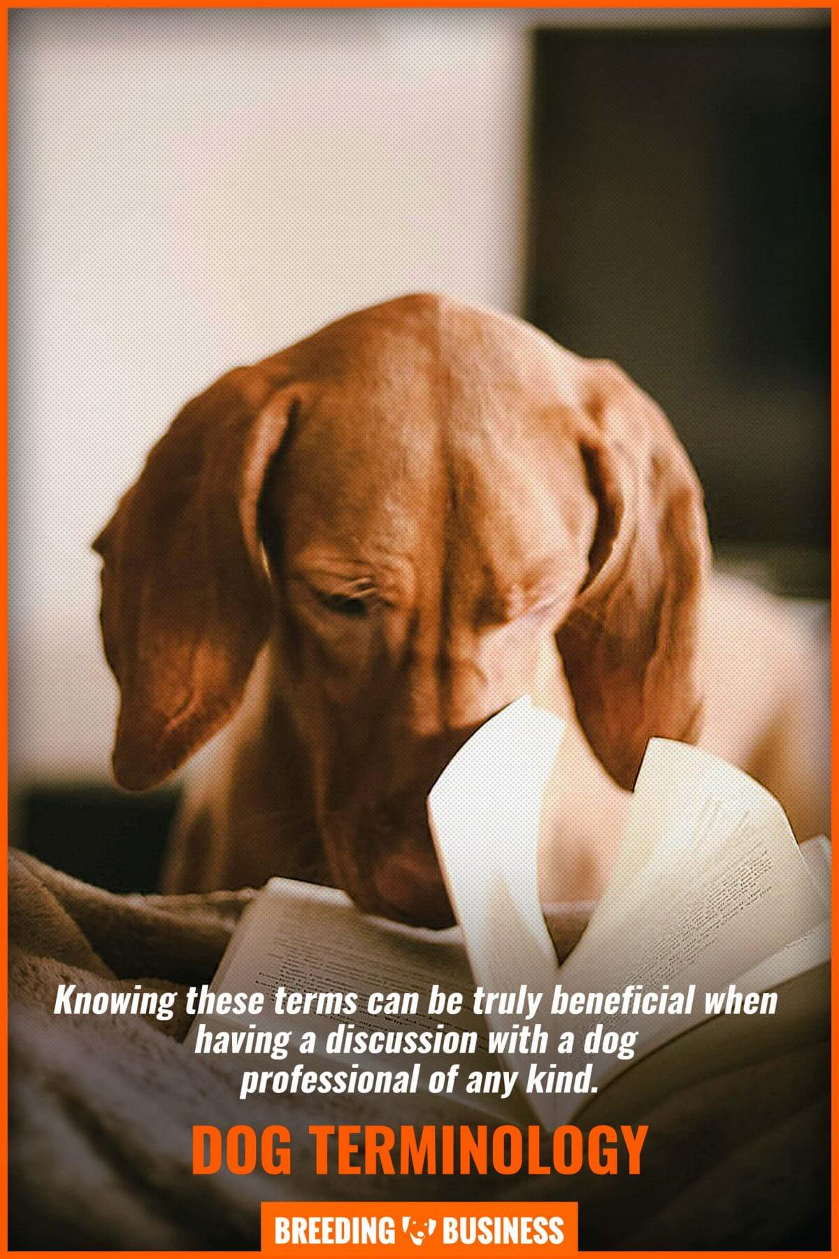 professional terms for dogs