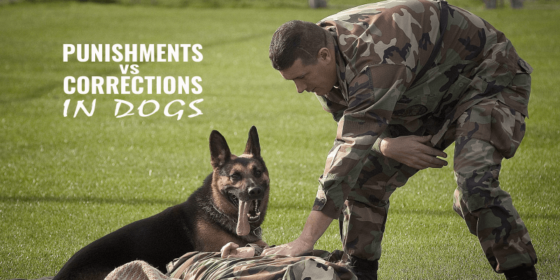 punishment vs correction in dogs