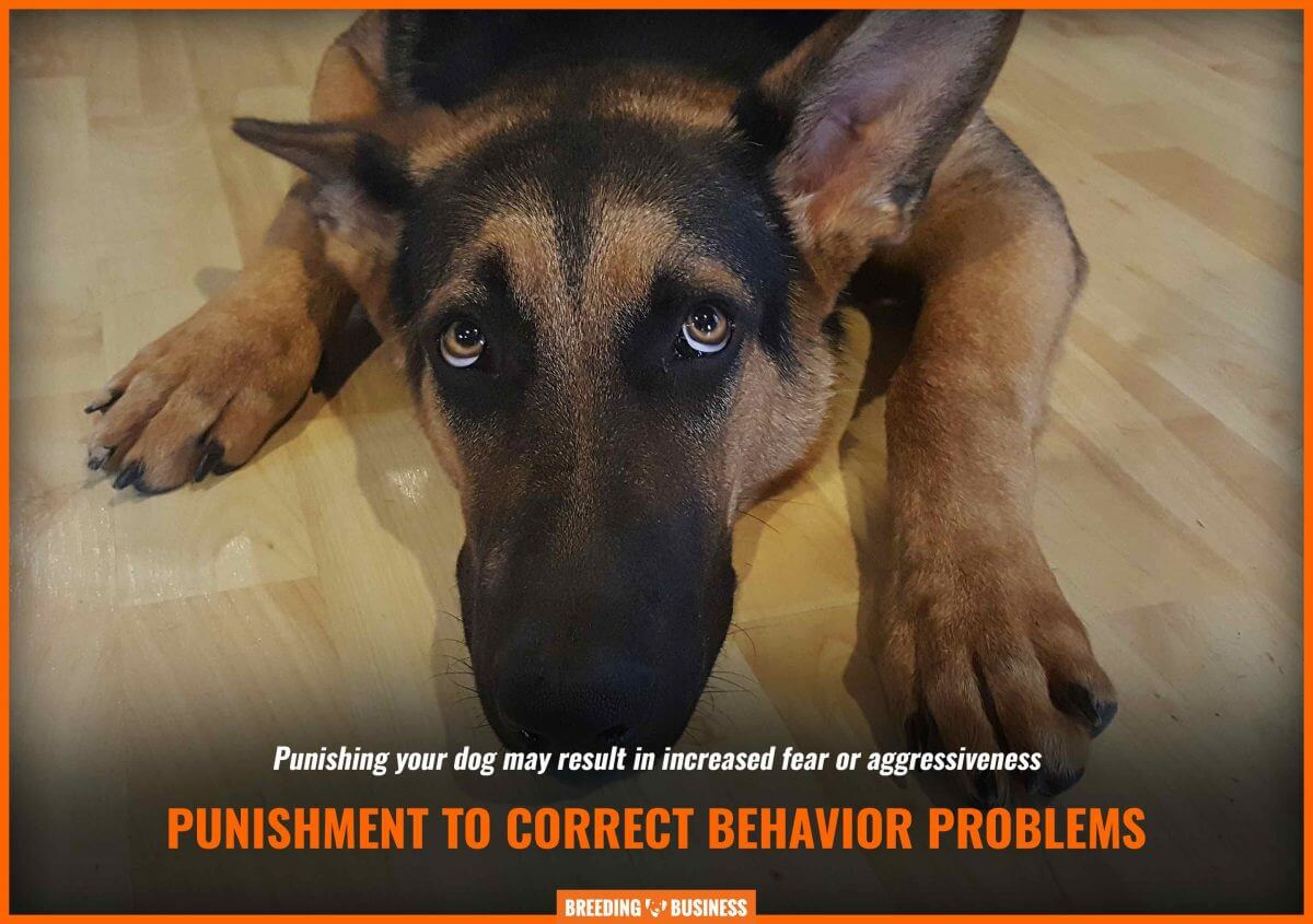 Punishing a dog instills fear.