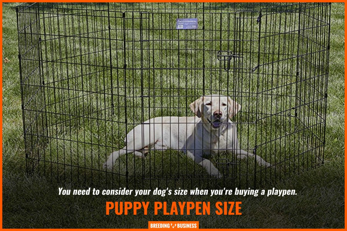 puppy playpen size