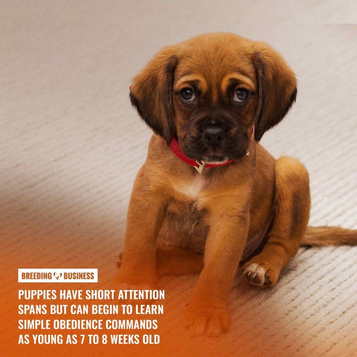 puppy training (short attention span)