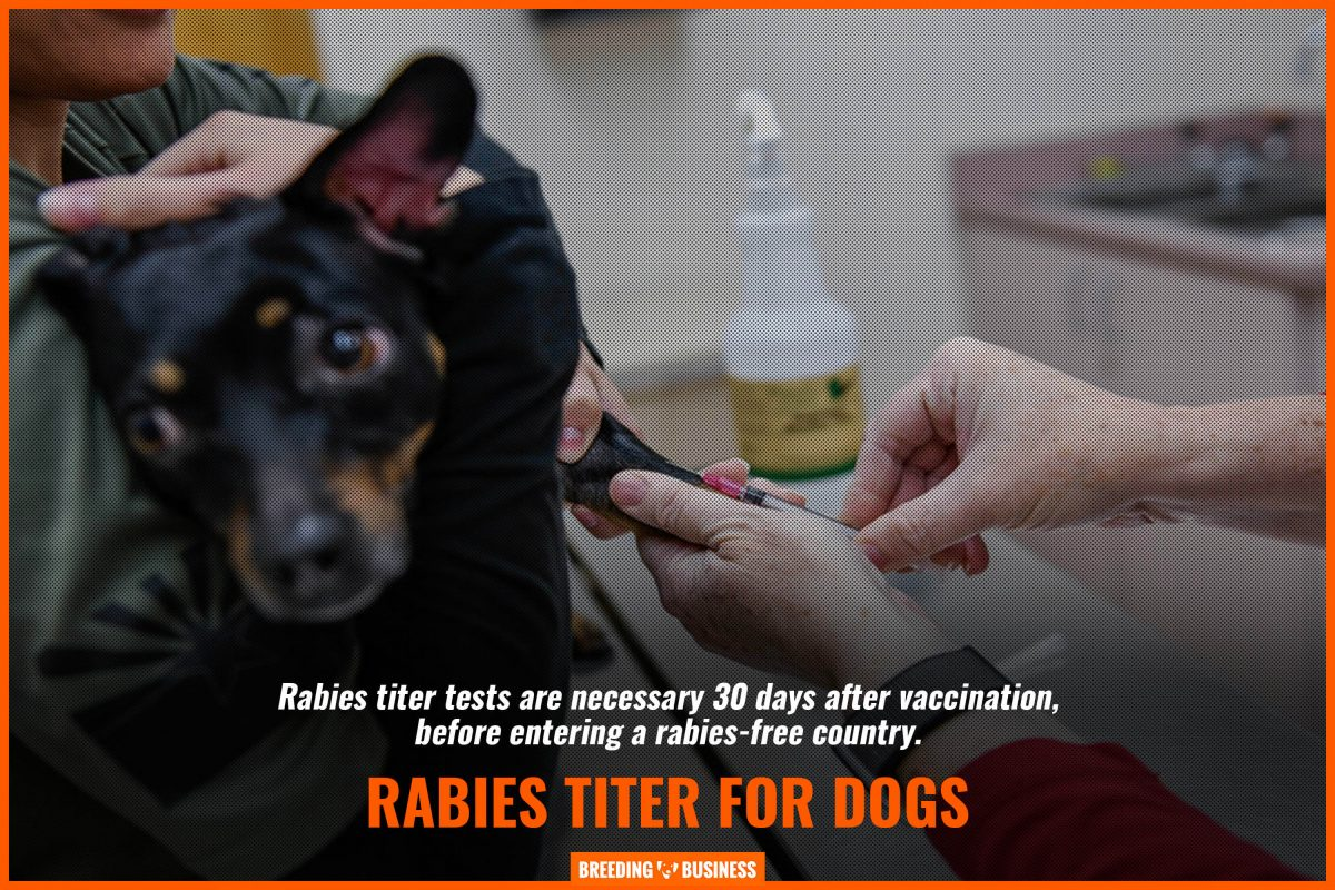 rabies titer for dogs