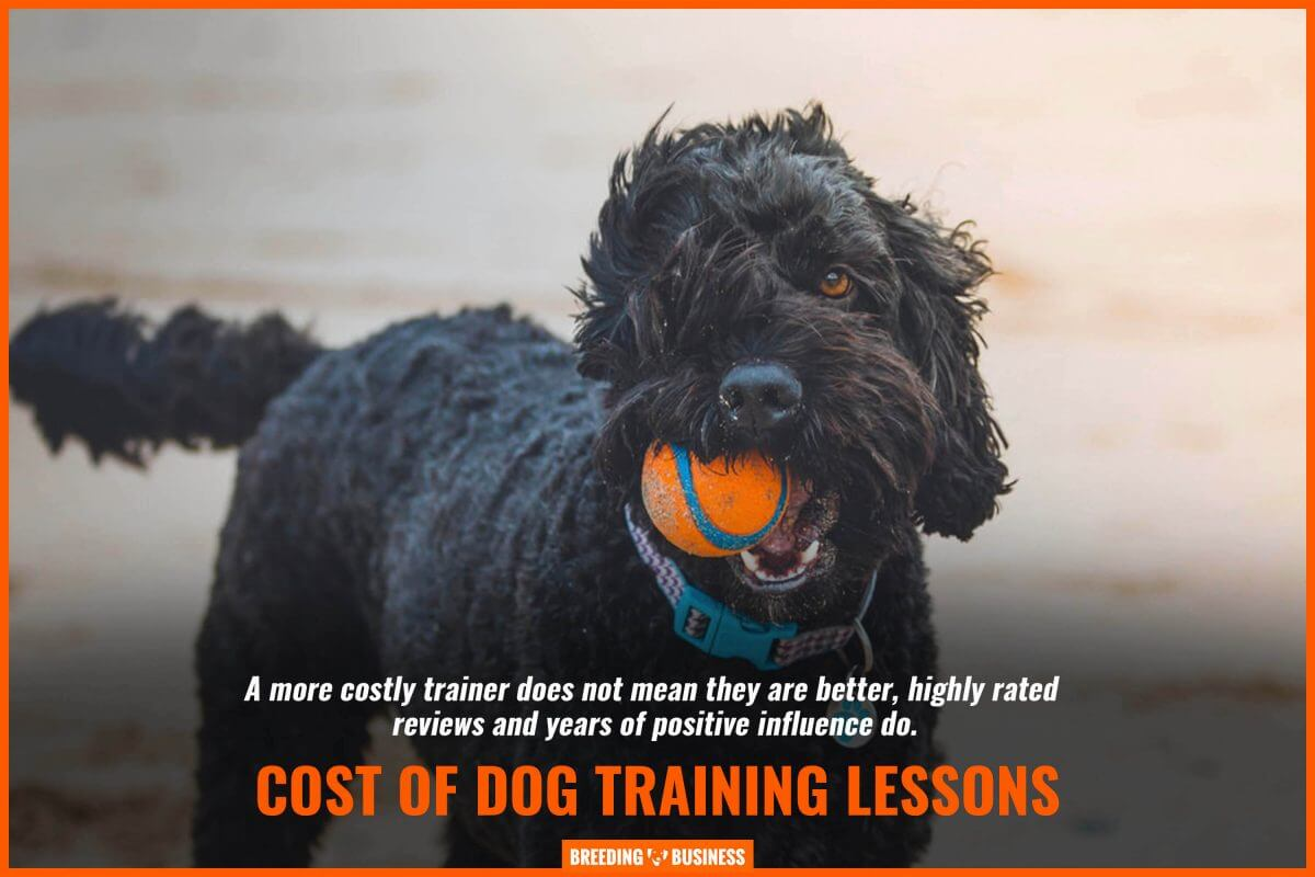 reviews and dog training lessonsreviews of dog training lessons