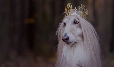 120+ Royal Dog Names – Kingly & Queenly Puppy Name Ideas