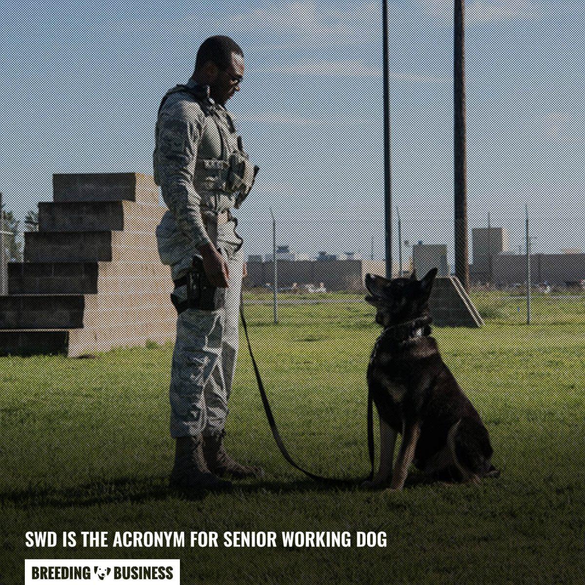 senior working dog acronym