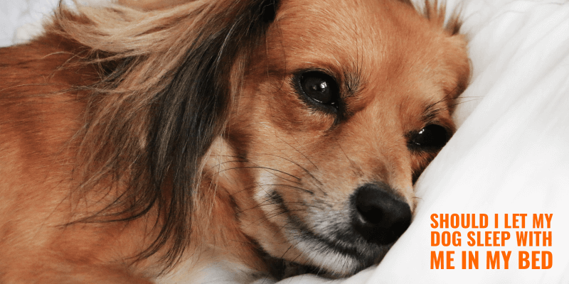 Should I Let My Dog Sleep In My Bed With Me?