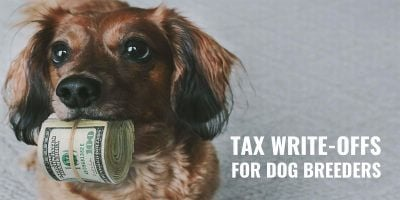 Tax Write-Offs Available For Dog Breeders