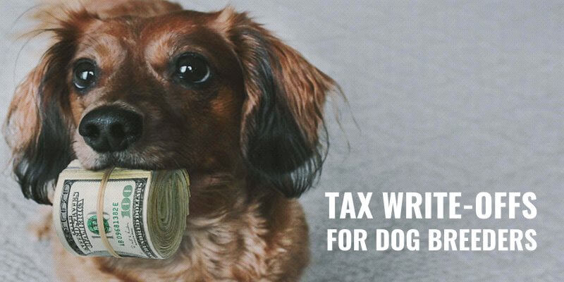 Tax Write-Offs For Dog Breeders
