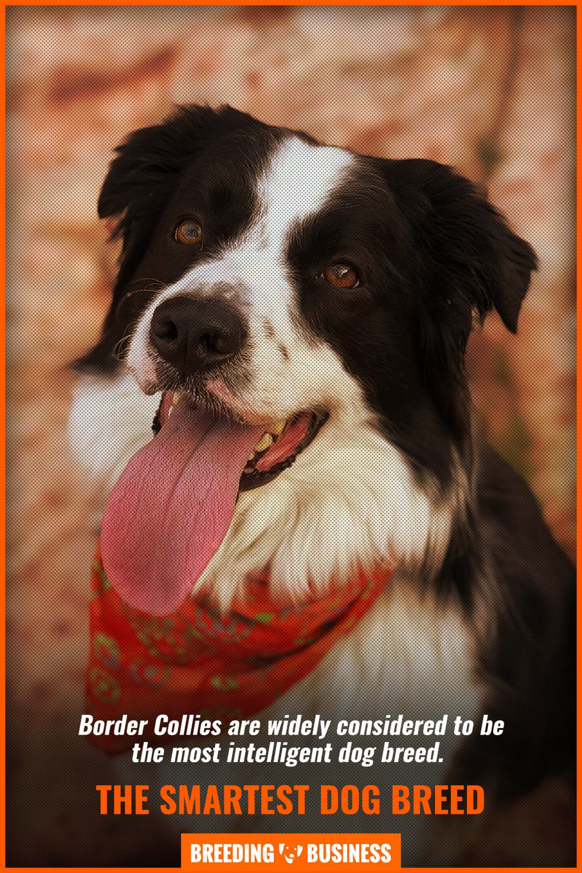the smartest dog breed