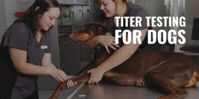 titer testing for dogs