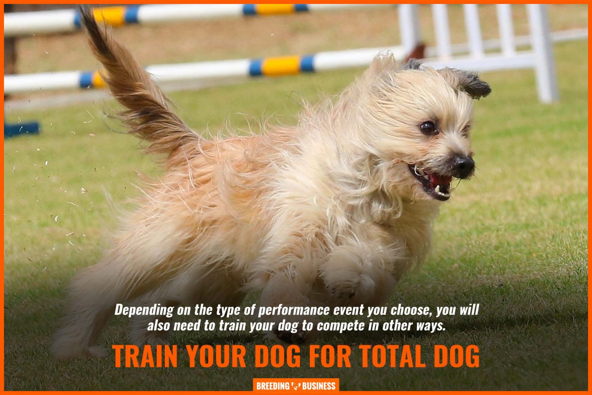 train your dog for total dog