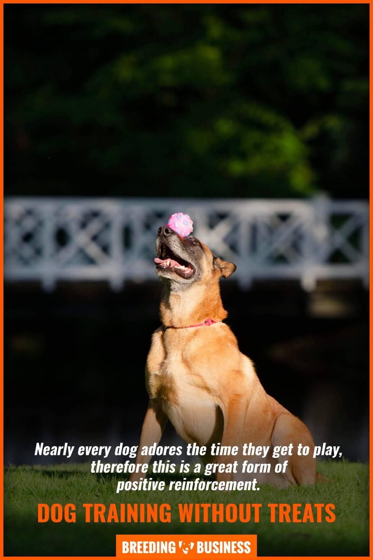 dog training using positive reinforcement