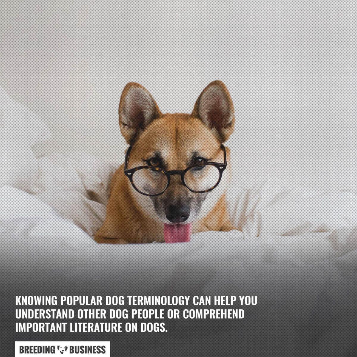 Understanding canine terminology