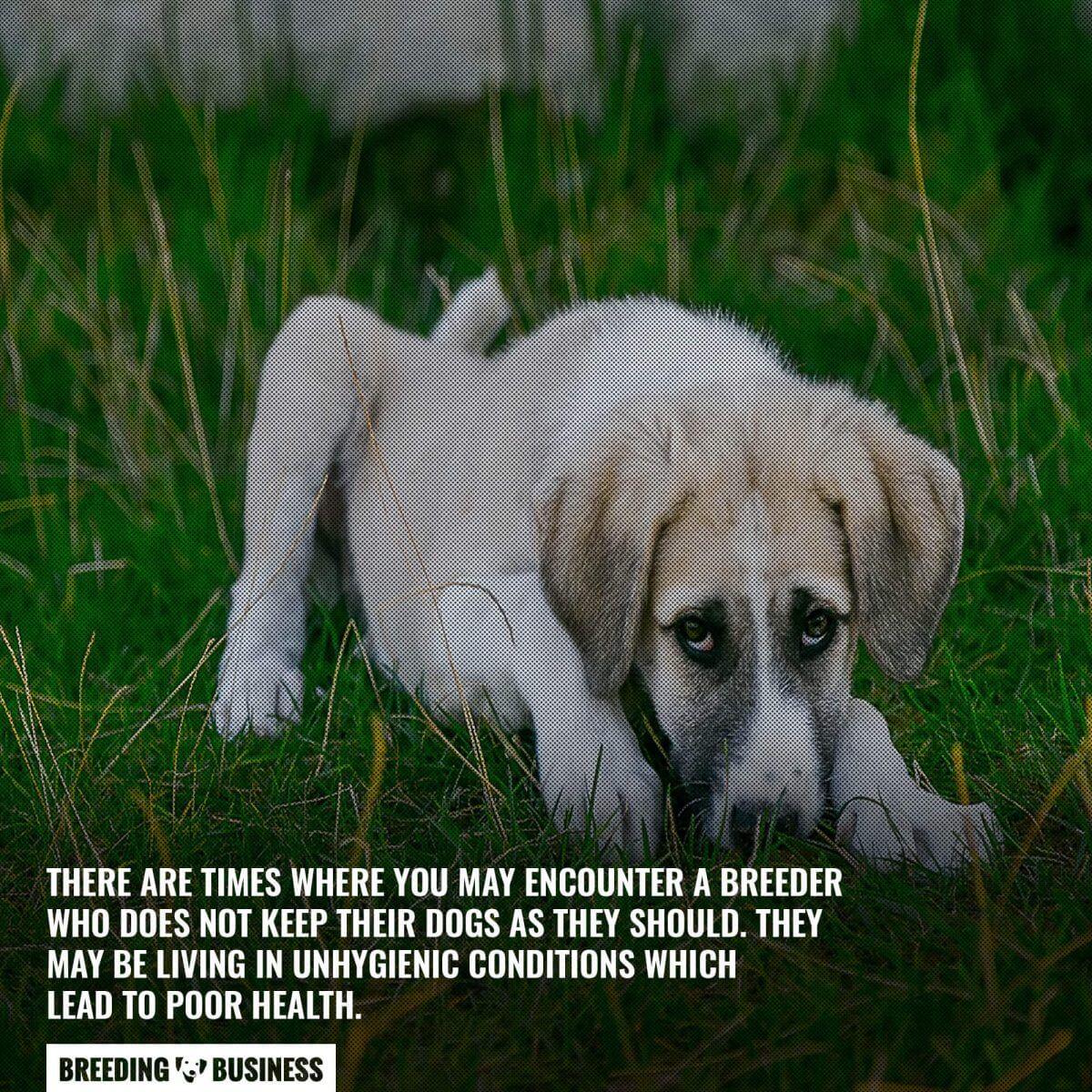 unhygienic dog breeders