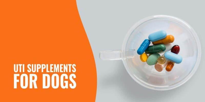 uti supplements for dogs